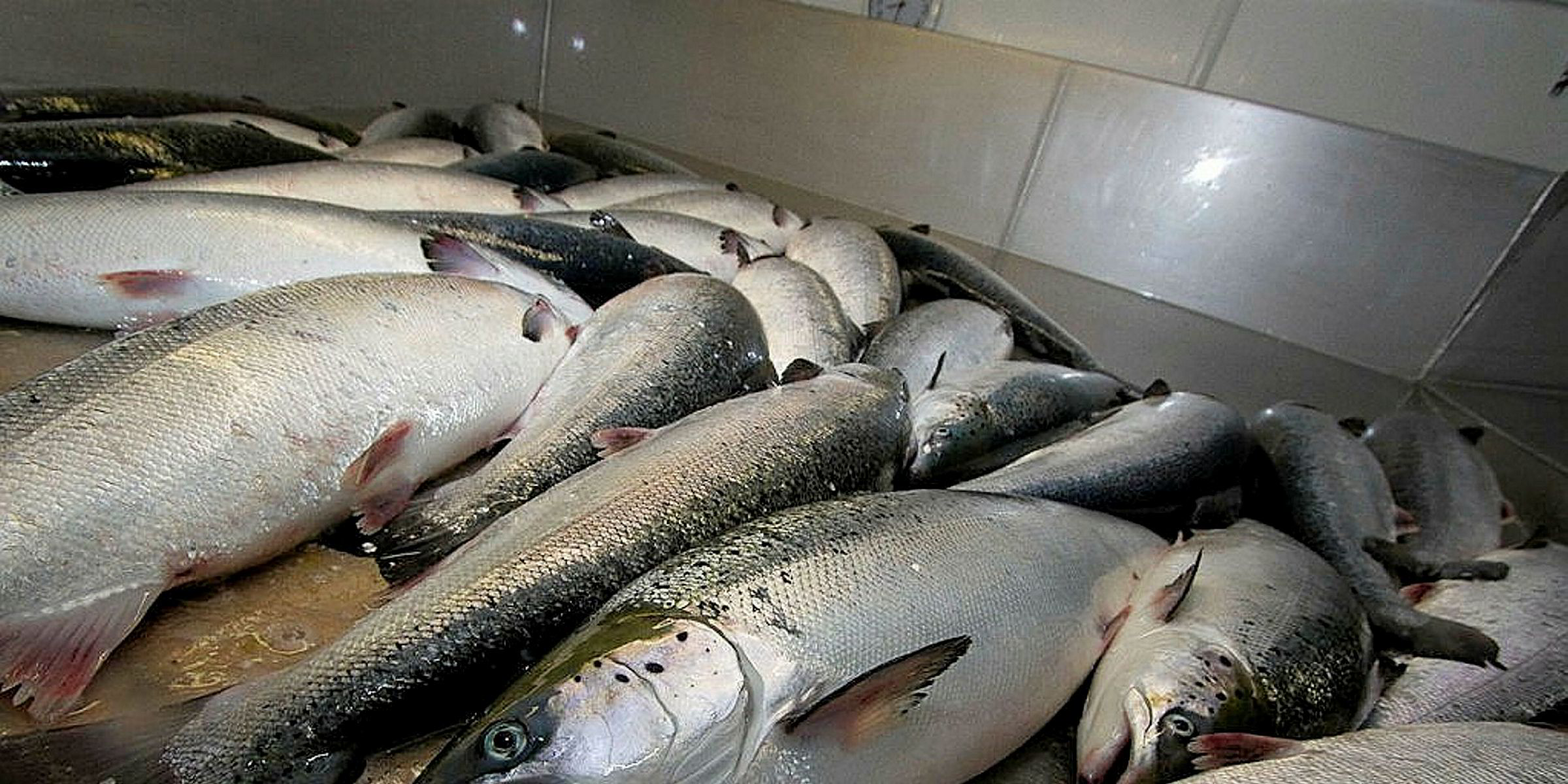 No Black Friday Deals For Norwegian Salmon Intrafish