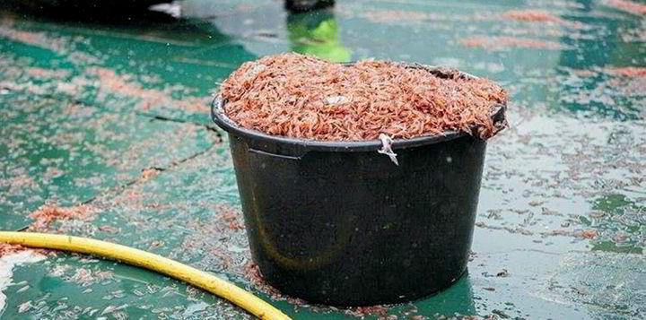 www.intrafish.no