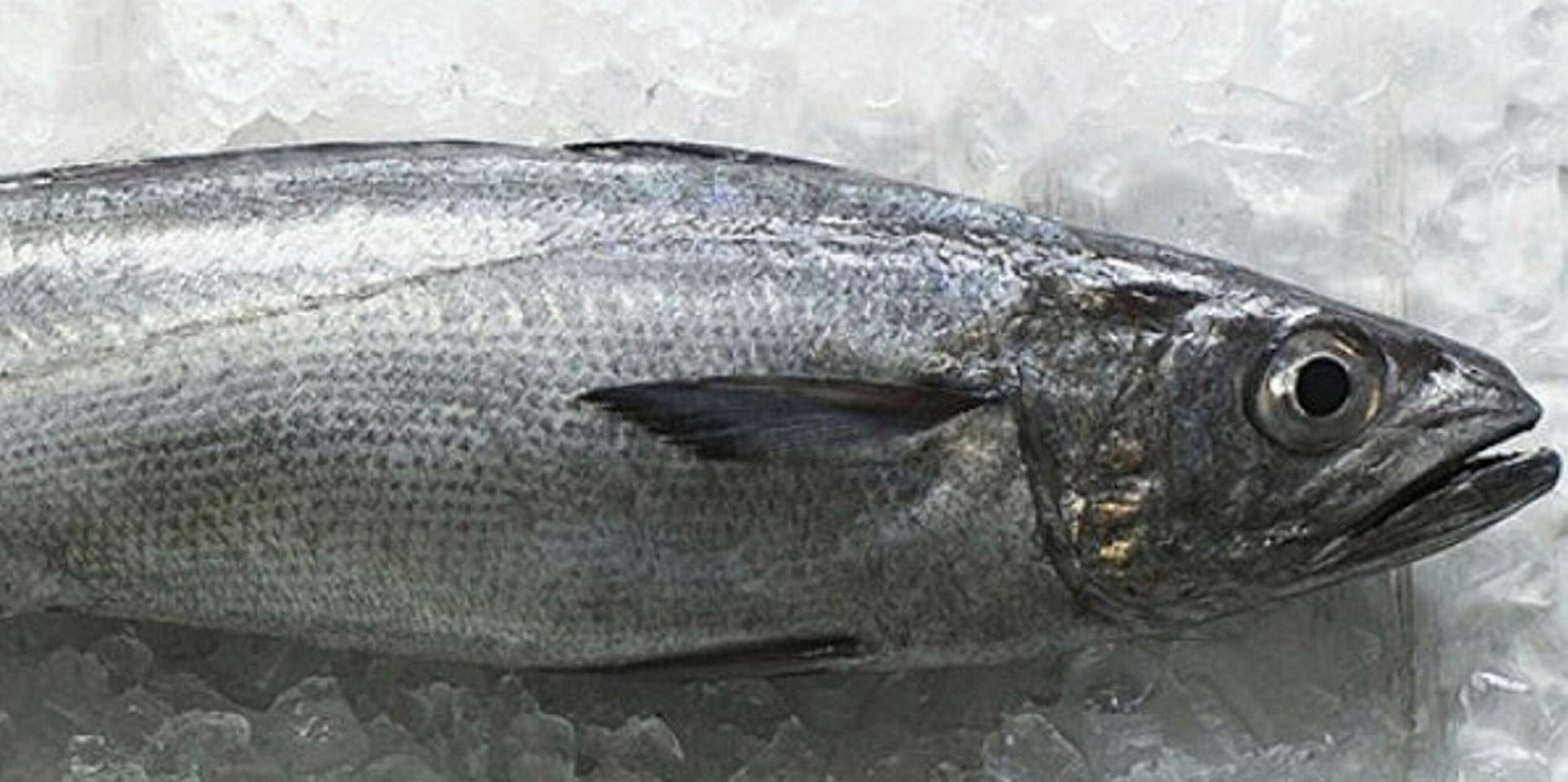 NZ fishing tech gets approval for hoki, hake, and ling | Intrafish